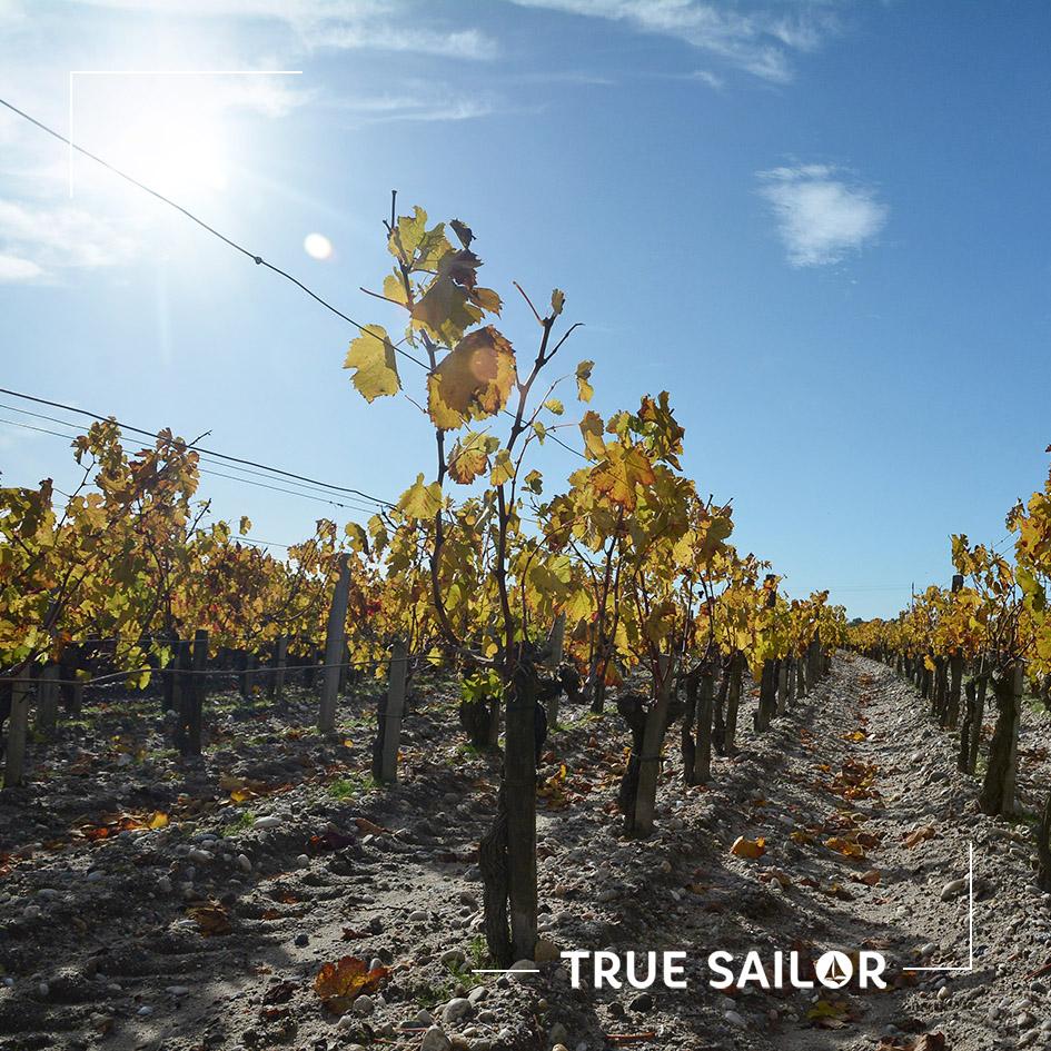 Séminaire Bordeaux dans les vignes